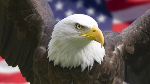 25 Cool Eagle Wallpapers For Desktop Graphicsbeam